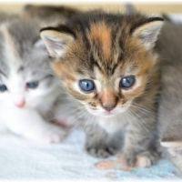 猫の去勢や避妊手術の時期と体重は?時期が遅いとどうなるの?