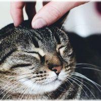 【撫で方】猫が喜ぶ触り方とは?猫が気持ちいいところ4つのツボ