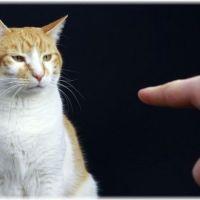 嫌がらせ?猫が布団に粗相をする4つの原因と4つの対策