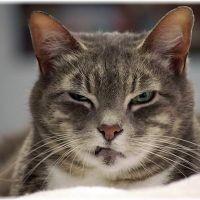 【威嚇】可愛くない!なつかないのは猫との遊びが原因だった