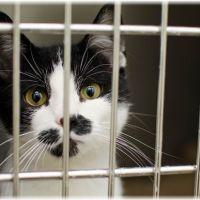 【一泊旅行】猫がケージでお留守番!真冬の3つの対策