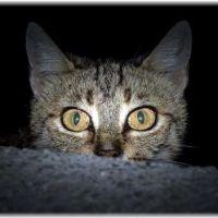 【また寝不足】引越しでの猫の夜鳴き3つの対策【注意点】