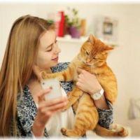 【嫌がるとは限らない】抱っこが好きな猫の種類TOP10