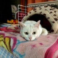 【チョットうるさい】猫が朝方に人を起こすほんとうの理由