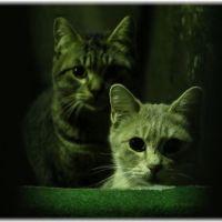 【緊急対策】猫に夜中起こされる!やってはダメな3つのこと