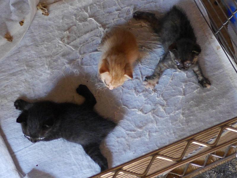 子猫 平地に避難