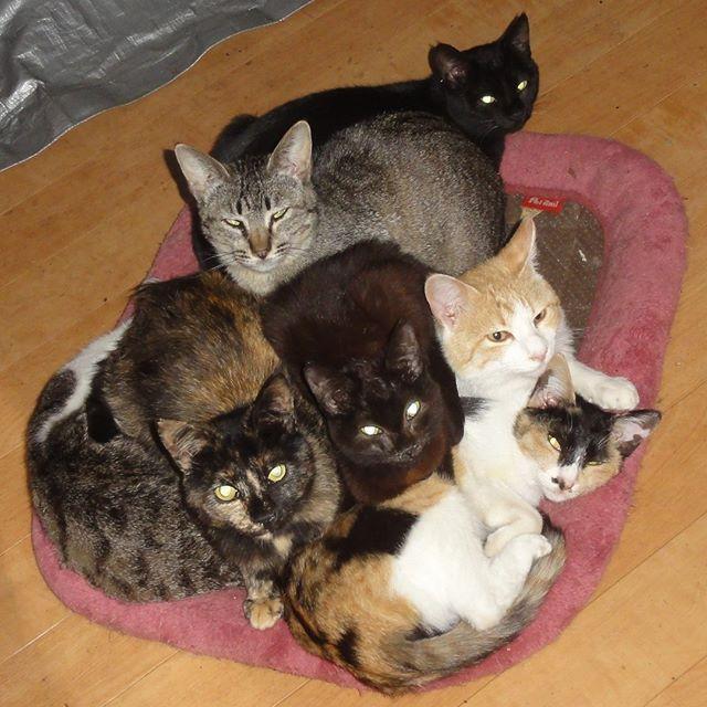 ネコ団子できました!いつもはソファーにあるネコ用座布団が床に落ちてて、なぜかそこに集まってた。座布団裏返しだし・・・。 #ねこ部 #ニャンスタグラム #にゃんすたぐらむ #ねこ #ネコ #ネコ部  #ネコ好き  #ネコスタグラム  #ネコのいる生活 #にゃんこ #しまねこ #黒猫 #キジトラ #三毛猫 #茶トラ #サビ猫 #cat #catstagram #petstagram #instacat #meow #catoftheday #ilovemycat #catlove #고양이 #고냥이 #냥이 #江田島