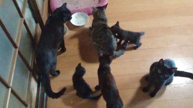 黒猫大集合初代くろいひとからチビッコまで5匹すべてがそろったよまさにオールブラックスだね#こねこ部 #こねこ #kitty #ねこ部 #ニャンスタグラム #にゃんすたぐらむ #ねこ #ネコ #ネコ部  #ネコ好き  #ネコスタグラム  #ネコのいる生活 #にゃんこ #しまねこ #黒猫 #キジトラ #cat #catstagram #petstagram #instacat #meow #catoftheday #ilovemycat #catlove #고양이 #고냥이 #냥이