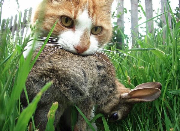 2015_01_05_ネコの狩り