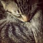なぜ猫は死期を感じると姿を消すのか!?