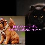 猫のインフルエンザ 種類や人やその他の動物からうつる!?感染事例などまじえて解説するよ!!