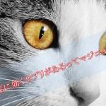 猫の認知症に効くサプリメントはあるのか?