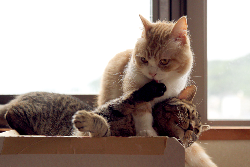 猫同士がなめる意味