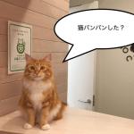 #猫バンバンプロジェクトについて感じたこと