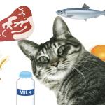 猫の食物アレルギーのアウトライン