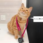 猫の心拍数の測り方