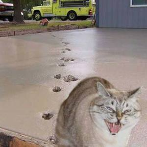 【この猫スタンプは嬉しい?嬉しくにゃい?】コンクリートに付いた猫の足跡