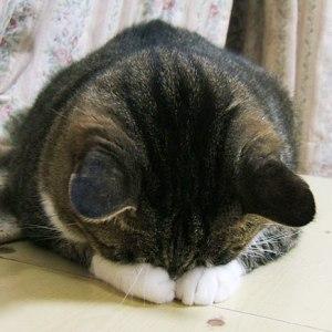 可愛すぎる猫の「ごめん寝」「すまん寝」「ゆるして寝」