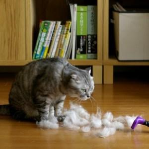 猫毛がごっそりとれる!ファーミネーターのススメ!
