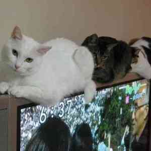「あるある!!」猫を飼っていて超ありがちなこと