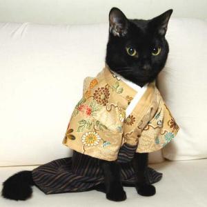 教えて猫先生!「七五三」を正しく「ねこる」方法♪