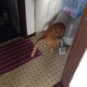 猫ちゃんの健康のために!「におい袋」について理解しよう