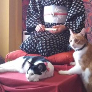 猫と一緒に寄席♪ ねこヨガ♪ 自走型保護猫カフェ「ネコリパブリック」