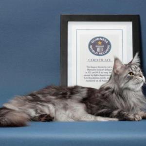 猫のギネス記録について知りたい!ギネス記録の猫たち。