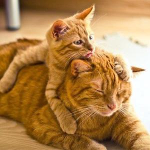 疲れた時に見たくなる!親子猫のほっこり画像集。
