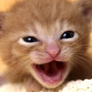【天使の鳴き声】ニヤニヤ必至!あどけない子猫たちの鳴き声