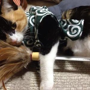 ハタキを持つ猫