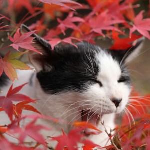今が見頃!紅葉を観に京都を訪れたならニャンコも一緒に愛でて来よう♪