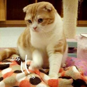 ずーっと見ていたい!! 猫の「ふみふみ」が可愛くてたまらない♪