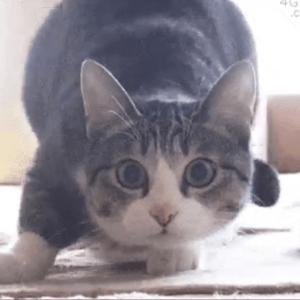 【Twitterで話題!!】心が乱れた時に見るgif~猫Ver.~に腹筋崩壊!?
