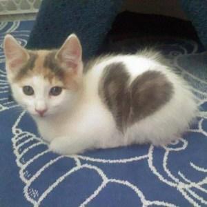 まさにミラクル!不思議な模様の猫ちゃん大集合♪