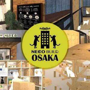 大阪心斎橋に「ネコビル」を建てるプロジェクトが進行中!