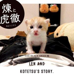 【生後3日目の猫を拾っちゃった!】ビジュアル系バンドマンと子猫の物語