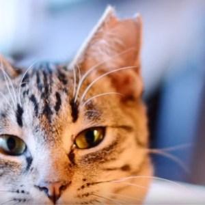 ご近所で野良猫が問題になったら・・・TNR活動で猫を救おう!