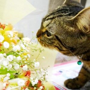 【あなたの家は大丈夫?】猫ちゃんを飼う家に置いてはいけないお花や植物