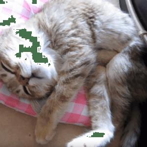 天使になった君へ……亡くなった猫に捧げられたムービーが悲しすぎる(´;ω;`)