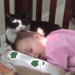 人間の赤ちゃんの毛づくろいをしてあげる猫ちゃん♡髪の毛を一生懸命ペロペロ。自分のことをママだと思っているのかな!?