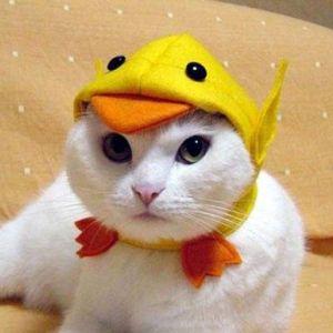 帽子をかぶらさせられている猫たちが可愛すぎ(*^^*)中にはとんでもないものをを被っている子も…
