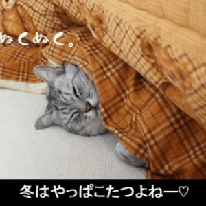 ぬくぬく♪暖をとる猫を見ているだけで温まるε-(´∀`*)暖かそうな猫たち♪