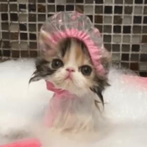 気分はセレブ♡泡風呂&シャワーキャップでバスタイムなネコちゃんが可愛い!