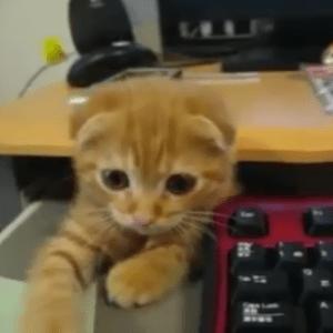 うちのネコは現場監督w仕事の指示をしてくるネコが可愛すぎるっ!