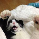 今日の猫缶『焼津のまぐろ 牛肉入りまぐろとささみ』