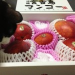光圀とマンゴー