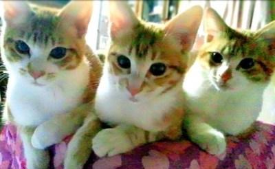 窪田家の猫ちゃん(画像引用:http://star-studio.jp/kazmasayuki/archives/2013/01/images/13596021151.jpg)