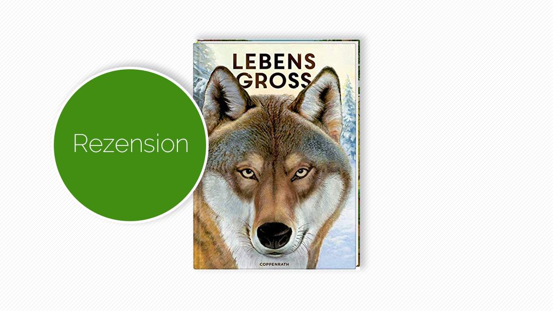 """Buchcover vom Kindersachbuch """"Lebensgroß - Tiere des Waldes"""""""