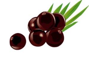 5種のスーパーフルーツを配合